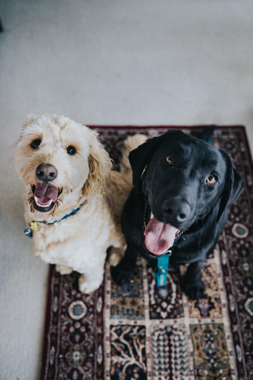 foto van honden